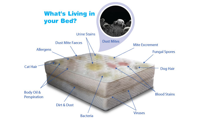 Mattress Cleaning Cleanwithcare